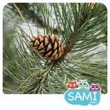 Sami Tiny Flash Cards Forest Adventures for kids, 30 flashcards tinycards forest adventure toddlers in 6 languages